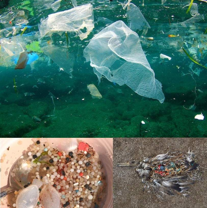 Image of plastic waste floating in the ocean, image of micro-plastics, image of deceased marine bird fill with plastic
