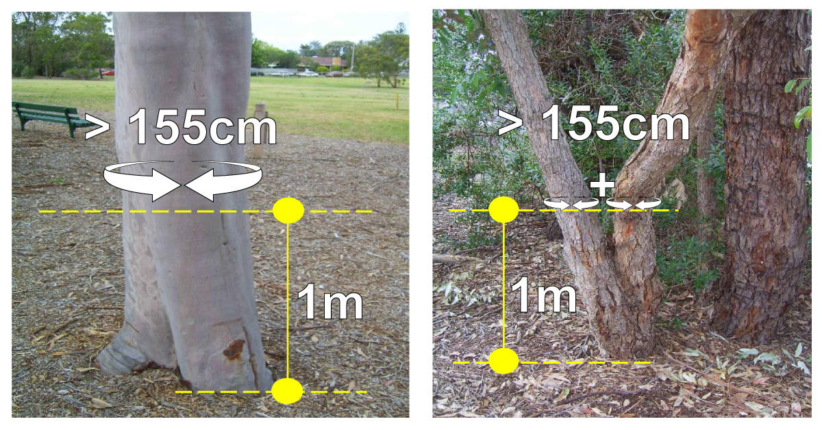 Tree measurement images