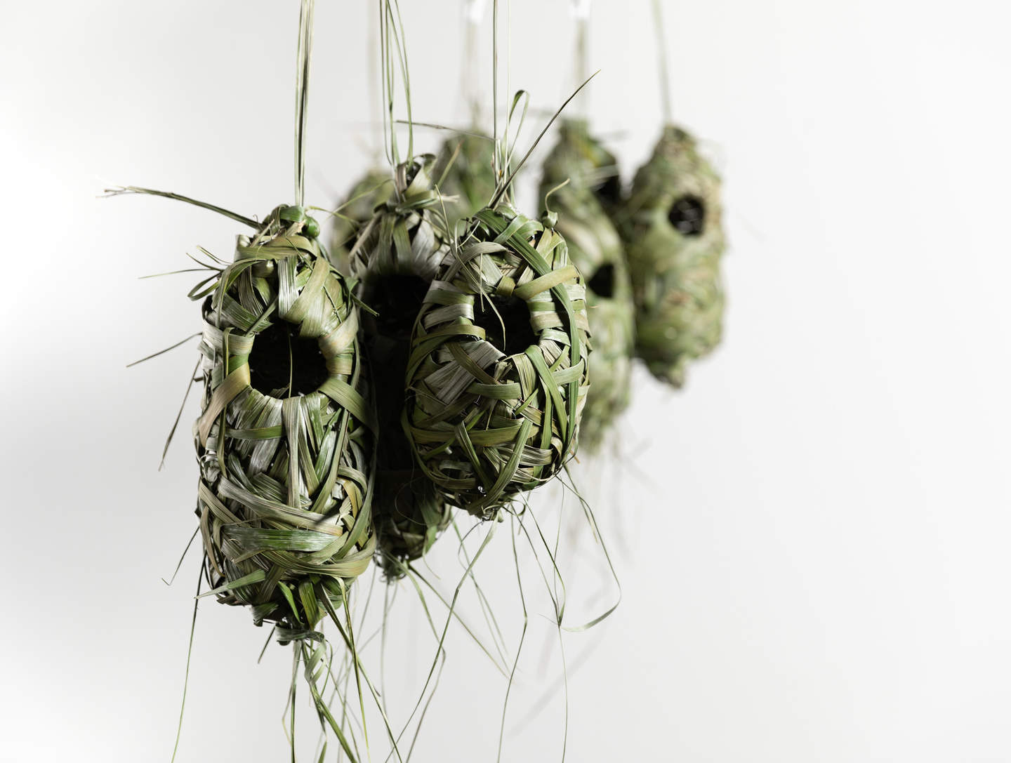 A group of suspended pendant shaped bird nests